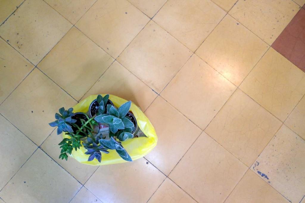 3plantitas1