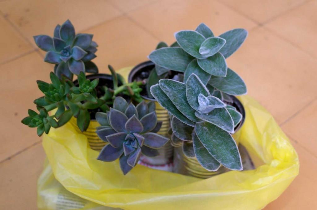 3plantitas2